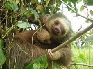 Sloth_02.jpg