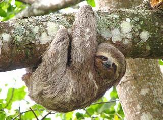 sloth1-r3-wma.jpg